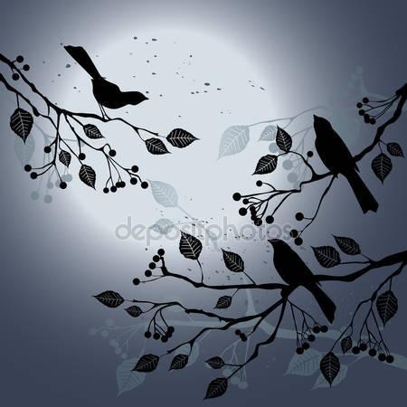 Птицы на ветке летом в ночное время