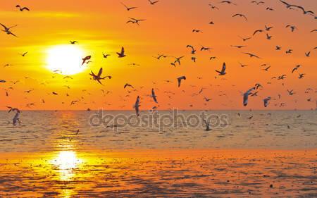 Птицы летящие в закат