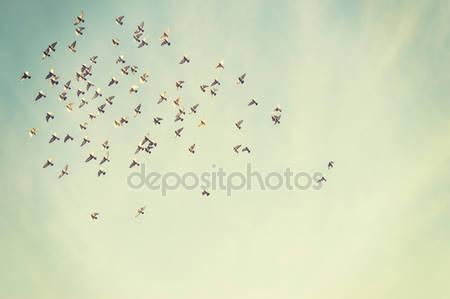 Летящие птицы в синем небе