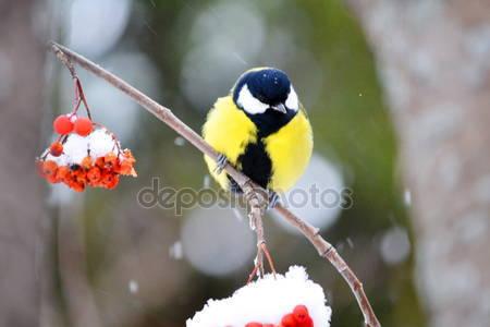 Степные птицы алтая