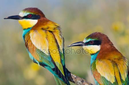 Несколько птиц