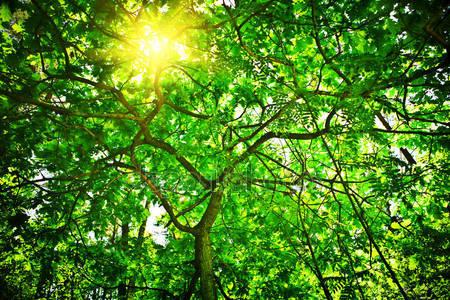 Фотообои Дерево с солнцем
