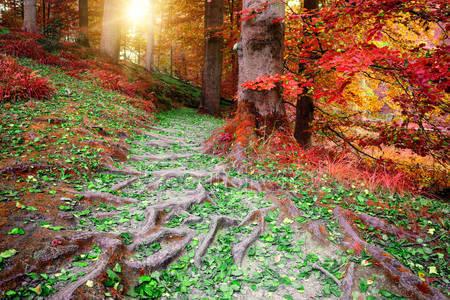 Красивый осенний пейзаж лес
