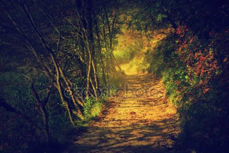 Глубоко в туманный лес
