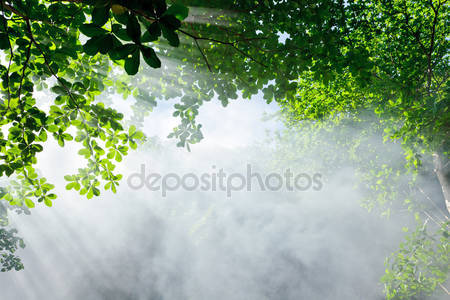 Утренний солнечный свет в лесу