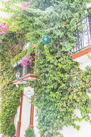 Улицы с цветами